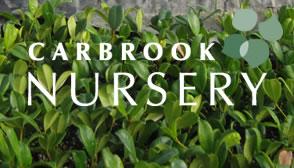 carbrook_nursery
